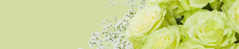 Groene rozen