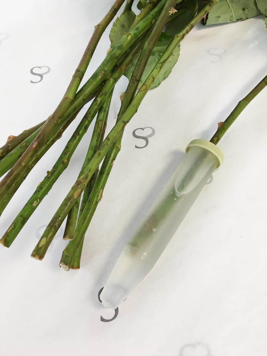 Surprose Waterflesjes voor rozen 24 ml - 100 stuks