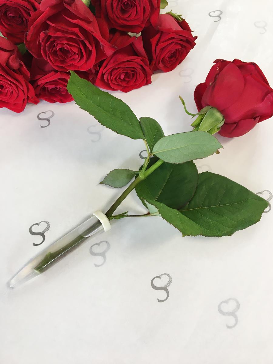 Surprose Waterflesjes voor rozen 7,5 ml - 100 stuks