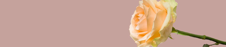 Avalanche Peach rozen bestellen
