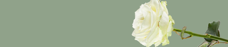 Avalanche rozen bestellen