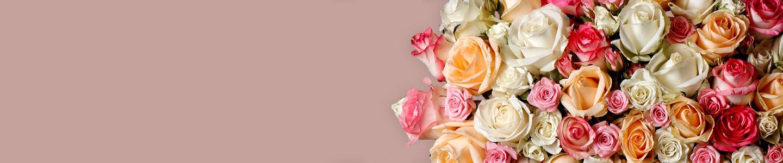 Alle rozensoorten van Surprose