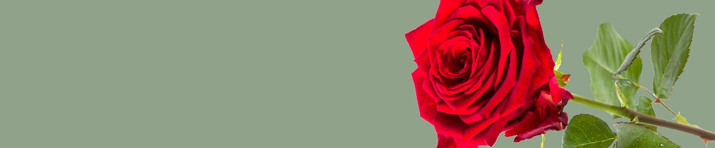 Red Naomi rozen bestellen