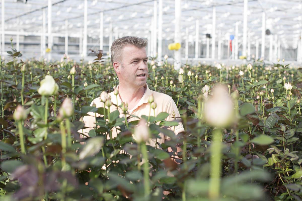 v. d. Berg Roses