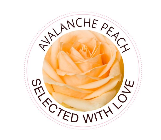 Avalanche Peach rozen