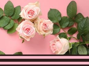 Frische Rosen bestellen