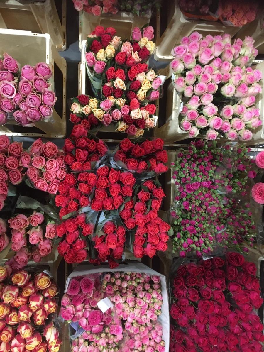 Verse rozen van de kweker