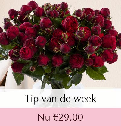 Wilde rode rozen bestellen