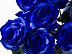 Blauwe rozen bestellen
