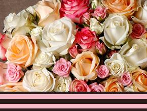 Betekenis kleuren van rozen