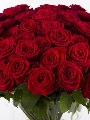 100 rode rozen - Red Naomi
