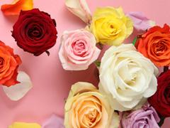 Kleuren rozen