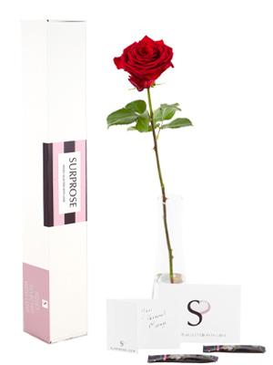 Enkele rode roos bestellen