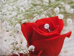 Decoreer een bruiloft met rozen