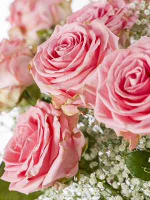 Exclusieve rozen: Sophia Loren