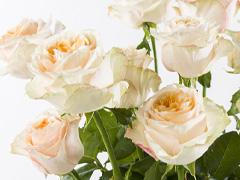 Exclusieve rozen: Victorian