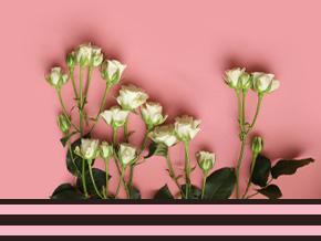 Premium rozen