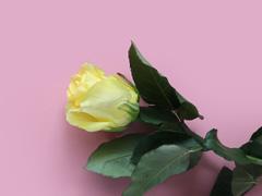 Gele rozen bestellen