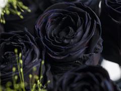 Zwarte rozen voor Halloween