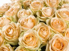 Kies je aantal zalmkleurige rozen