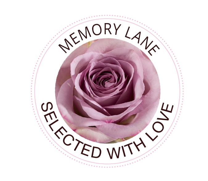 Memory Lane rozen