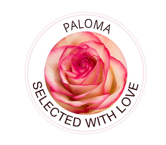 Paloma rozen