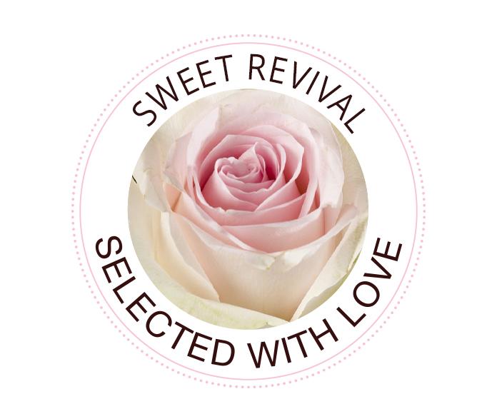 Sweet Revival rozen