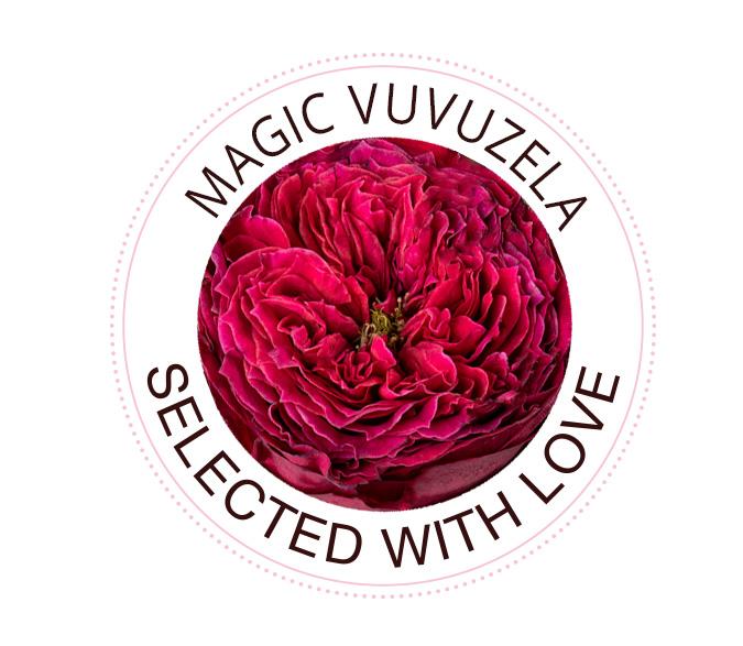 Magic Vuvuzela rozen
