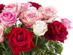 Boeket rode-roze rozen