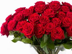 Online rode rozen kopen