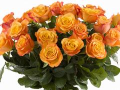 Oranje rozen kopen