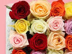 Alle kleuren rozen