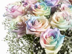 Pastel regenboog rozen