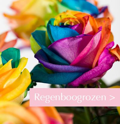 Regenboog rozen bestellen