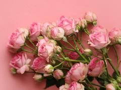 Roze trosrozen