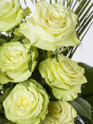 Groene rozen bestellen