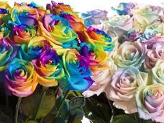 Regenboog rozen bezorgen