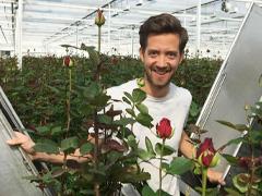 Meewisse Roses