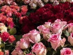 Verse rozen