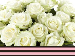 Zakelijk grote hoeveelheden rozen bestellen