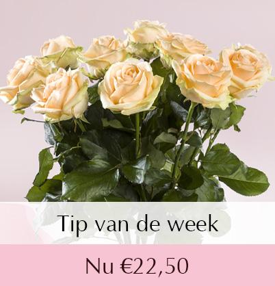 zalmkleurige rozen bestellen