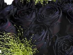 Zwart rozenboeket